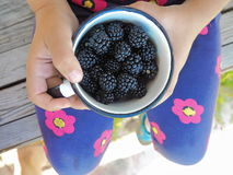 Little Girl Holding a Cup Full of Ripe Blackberries. Little Girl Holding a Cup Full of Ripe Blackberries on Her Knees Stock Photography