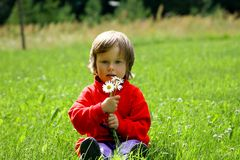 Little girl holding daisies Royalty Free Stock Photos