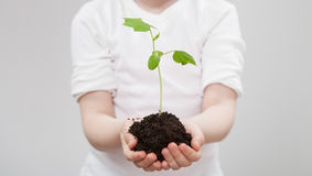 Little girl holding a green sprout in her palms Stock Photography