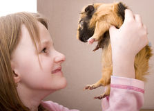 Little girl holding guinea pig Stock Image