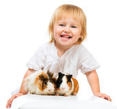 Little girl holding a guinea pig Royalty Free Stock Photography