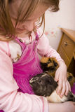 Little girl holding guinea pigs Stock Image