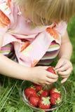 Little girl holding strawberry. Stock Image