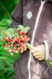 Little Girl holding Summer Bunch of Ripe Wild Strawberries with Royalty Free Stock Photos