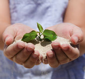 Little girl holding young plant Stock Image