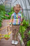 Little girl holds the crop onions in the Royalty Free Stock Photo