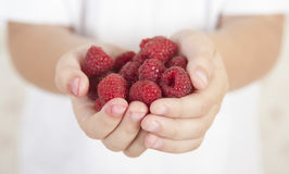 Little girl holds handful of raspberries Stock Image