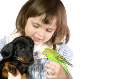Little girl holds Parrot and dog. The beautiful little girl holds Parrot and dog on white background close up stock photography
