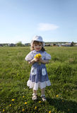 Little girl holds yellow dandelions on green field Royalty Free Stock Photography