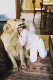 Little girl at home with her golden retriever dog Royalty Free Stock Photo
