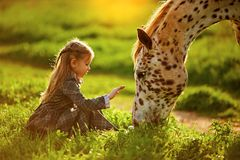 Little girl and horse stock photography