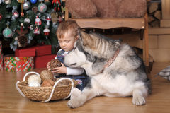 Little girl in the house and Malamute Royalty Free Stock Photos