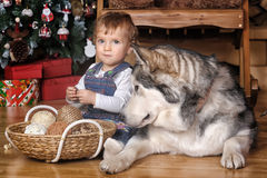 Little girl in the house and Malamute Royalty Free Stock Images