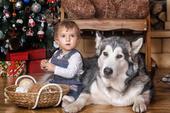Little girl in the house and Malamute Stock Image