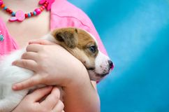Little girl hugging a puppy jack russel terrier breed. She`s holding the dog on her hands. Little girl hugging puppy jack russel terrier breed. She`s holding royalty free stock photo