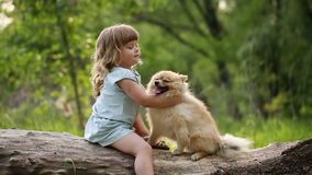 Little girl hugging Spitz. stock footage