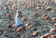 A Little Girl Hurries to Grab the Perfect Pumpkin Stock Photography