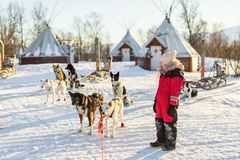 Little girl with husky dog. Adorable girl having a cuddle with husky sled dog in a farm in Northern Norway Stock Images