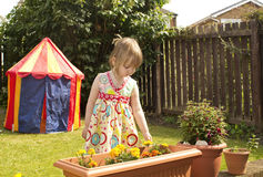 Little girl inspecting flowers. Pre-school child in a sunny garden, touching flowers in a tub Stock Images