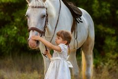 The little girl irons a horse. The little girl irons a white horse on a muzzle Stock Image