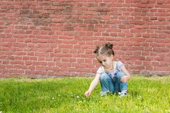 Little girl in jeans with suspenders sits on the grass. Near old brick wall and picking flowers stock photo