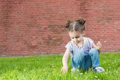 Little girl in jeans with suspenders sits on the grass. Near old brick wall and picking flowers in hand royalty free stock photo
