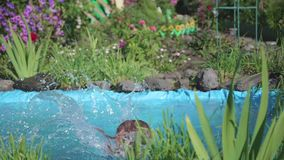 A little girl jumps into a small pond, splashing water from the jump. The child enjoys cool water on a hot summer day. Girl swimming in a small pond. Flowers and stock footage