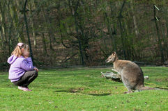 Little Girl  and  kangaroo. The little girl and kangaroo want to make friends Royalty Free Stock Photography