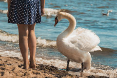 Little girl kid on beach at sea with swan. Fun. Stock Photos