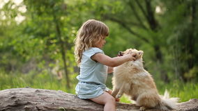 Little girl kisses in nose Spitz stock video footage