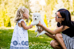 Little girl kissing her puppy Samoyed breed stock photo