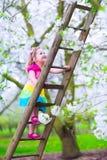 Little girl on a ladder in apple tree garden Stock Photography