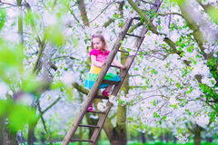 Little girl on a ladder in apple tree garden Royalty Free Stock Images