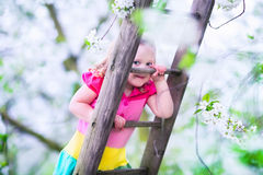 Little girl on a ladder in apple tree garden Stock Images
