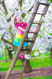 Little girl on a ladder in apple tree garden Royalty Free Stock Photos