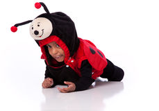 Little girl in ladybug costume Royalty Free Stock Photos
