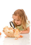 Little girl with large lens studying chicks Royalty Free Stock Photo