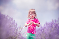 Little girl in a lavender field Stock Images