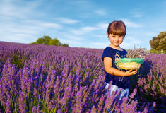 little girl is in a lavender field holds a basket of flowe Royalty Free Stock Photo