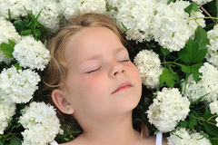 Little girl laying in flowers - snowball Stock Photography