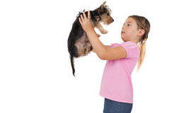 Little girl lifting up yorkshire terrier puppy Royalty Free Stock Photos