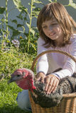 Little girl little farmer is holding a turkey Stock Images