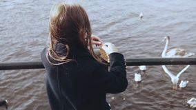 Little girl feeding swans and seagulls near water. Small female child feeds waterbirds on autumn river quay. Back view. Little girl with long hair in dark warm stock video