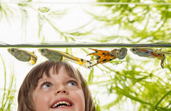 Little girl looking at aquarium fish Stock Image