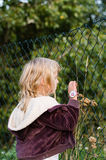 Little girl looking through the fence Stock Images