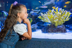 Little girl looking at fish tank. At the aquarium royalty free stock photo