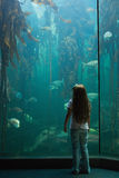 Little girl looking at fish tank Royalty Free Stock Photography