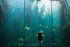 Little girl looking at fish tank Stock Image