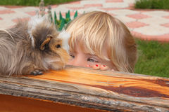 Little girl  looking on Guinea pig Royalty Free Stock Image