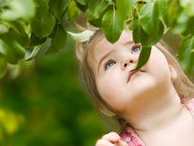 Little girl looking for the pear Royalty Free Stock Image